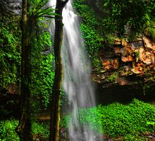 Crystal Shower Falls - Dorrigo National Park NSW by Jennifer Craker