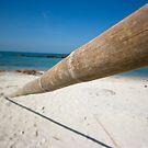 Bamboo stick by Dmitry Rostovtsev