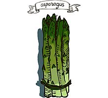 watercolor hand drawn vintage illustration of asparagus Photographic Print