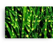 Tiger Grass Canvas Print