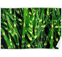Tiger Grass Poster
