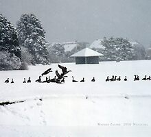Canadian Geese playing in the Snow 2 by Maureen Zaharie