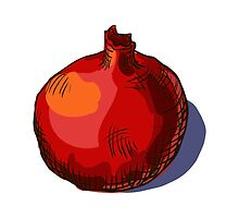 watercolor hand drawn vintage illustration of pomergranate by OlgaBerlet