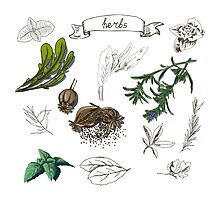 illustration set with hand drawn herbs by OlgaBerlet