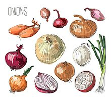 illustration of retro organic Onions set by OlgaBerlet