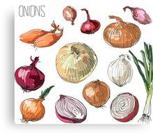 illustration of retro organic Onions set Canvas Print