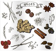 illustration background with hand drawn spices Poster