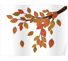 Fall Leaves on Branch Poster