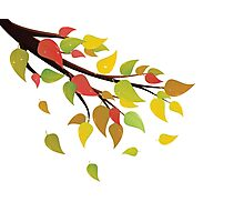 Fall Leaves on Branch 2 Photographic Print