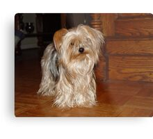 The Yorkie at the Antique Cottage Metal Print