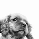 Portrait of a Puppy by Honor Kyne