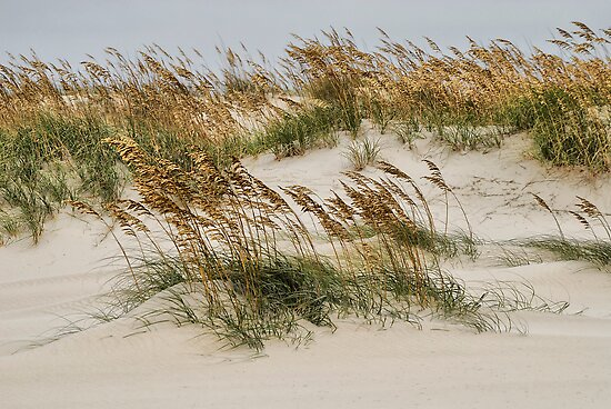 North Carolina Dunes by Andy Mueller