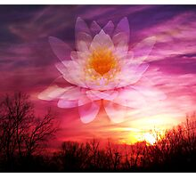 Rising Lotus Setting Sun Photographic Print