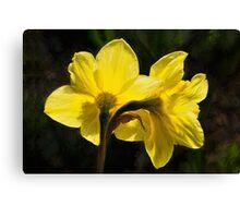 Daffodils - Impressions Canvas Print