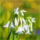 Little White Flowers - Impressions by Susie Peek