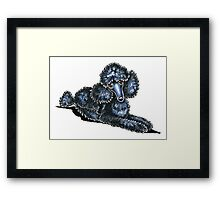 Black Miniature Poodle Lay Pretty Framed Print
