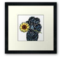 Sunny Black Miniature Poodle Framed Print
