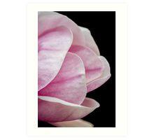 magnolia blooming  on tree Art Print
