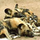 What dogs do best (African hunting dogs) by GrahamCSmith
