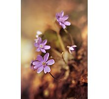 Afternoon impression with liverworts Photographic Print