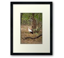 White stork  Framed Print