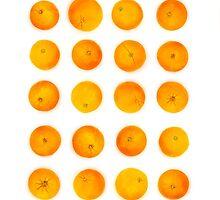 Oranges in rows by ONiONAstudio