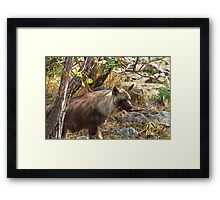 Brown Hyena, South Africa Framed Print