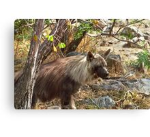 Brown Hyena, South Africa Canvas Print