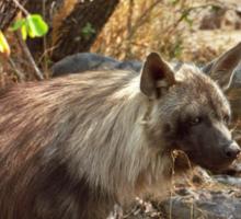 Brown Hyena, South Africa Sticker
