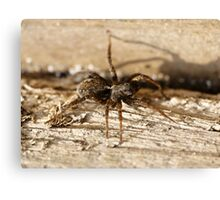 Here's looking at you and you and you (spider) Canvas Print