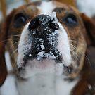 Snowflakes by rmcbuckeye