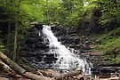 F. L. Ricketts Cascading Falls by Gene Walls