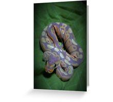 Banana ball python Greeting Card