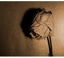 Dried rose.. Photographic Print