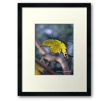 Last Leaf Framed Print