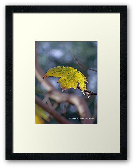 Last Leaf by Dennis  Stanton