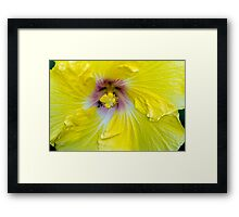 Yellow Hibiscus SRF 17 5799 Framed Print