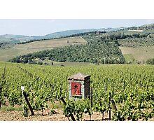 Tuscan Vines Photographic Print