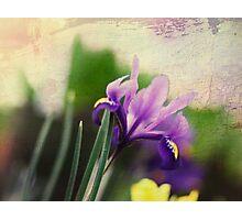 textured iris Photographic Print