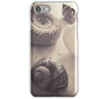 Still Life - Shells  iPhone Case/Skin