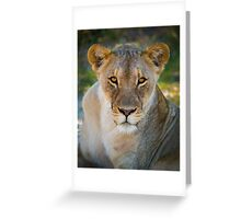 Lioness - Etosha National Park - Namibia Greeting Card