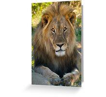 Lion - Etosha National Park - Namibia Greeting Card