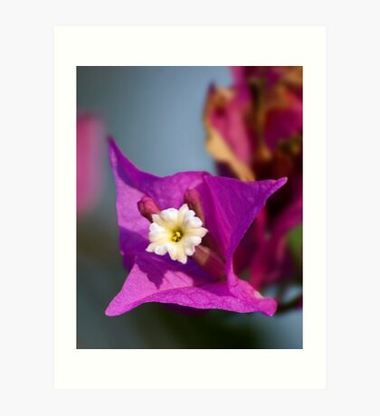 Purple with a touch of Yellow Art Print
