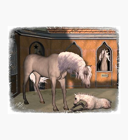 Iaconagraphy Equus: Pharaoh's Stableyard Photographic Print