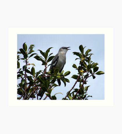A good morning song from a Mocking bird..... Art Print