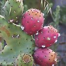Cactus Study #2 by Heather Friedman