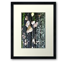 aged wood in autumn Framed Print