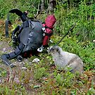 Marmot Hiker by Robert Yone