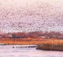 Migration Morning on The Platte by Owed To Nature