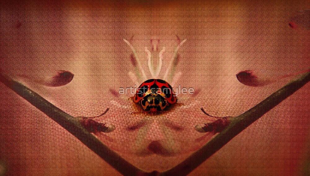 Little Ladybug by Amy-lee Foley